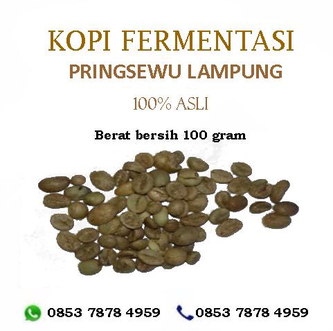 KOPI FERMENTASI PRINGSEWU-LAMPUNG,  WA. +6285378784959 www.youtube.com